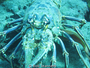Spiny lobster close up by Bob Jeannetti 